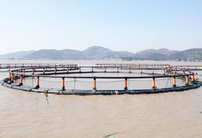浙江大黄鱼养殖项目